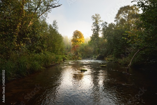 River in the forest at sunrise, mighty golden tree close-up Wallpaper Mural