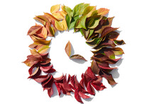 Colorful Leaves In A Circle On White Isolated Background. Fall Leaves. Autumn Composition. Flat Lay, Top View, Copy Space. Clock Hands Made From Leaves.