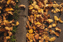 Dry Autumn Leaves Of Yellow, Red And Brown Flowers Lie On The Edge Of The Road,on The Side Of The Road. Bright Yellow Leaves Among Dry Maple Leaves Lie On The Asphalt.