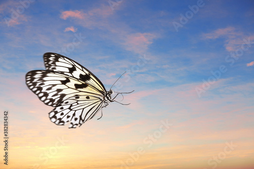 Beautiful butterfly flying in sky at sunset