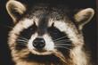 canvas print picture - Waschbären Nahaufnahme I