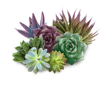 Collection Of Different Beautiful Succulents On White Background