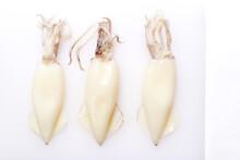 Three Raw Splendid Squid Isola...