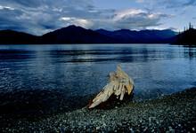 Driftwood On Kluane Lake At Tw...