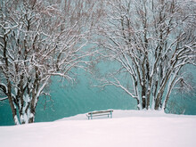 Snow Covered Trees And Bench B...