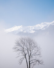 Lonely Winter Tree In Front Of...
