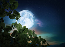 Fantasy Night. Tree Branch And Full Moon In Starry Sky