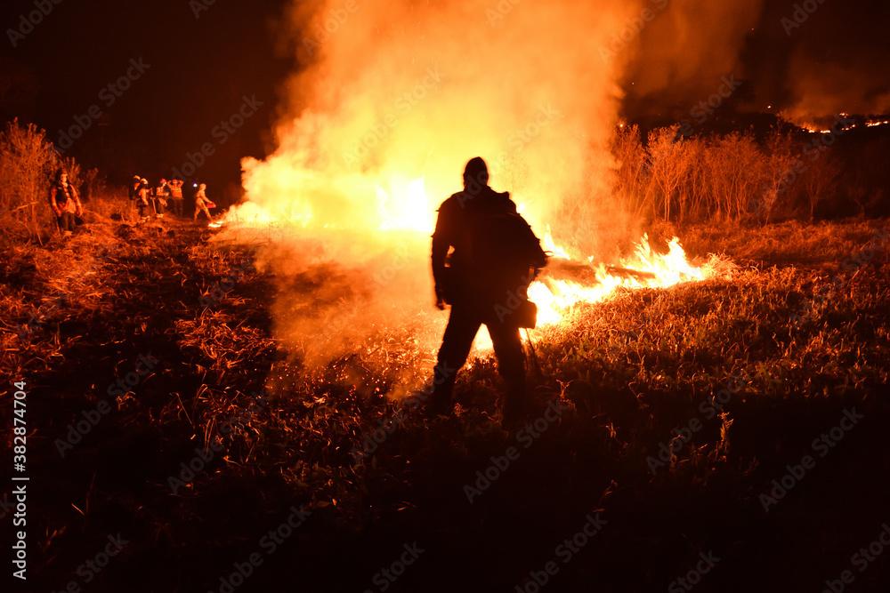 Fototapeta fire in the forest