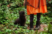 Halloween Big Fluffy Cat Sitting Near Little Girl Legs Wearing Black Striped Tights And Leather Boots.