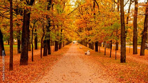 Autumn Boulevard in Tsarskoye Selo Wallpaper Mural