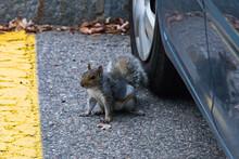 Squirrel Next To Car