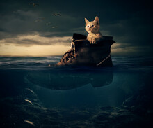Lonely White Kitten Hiding In Old Boot Sailing In It On The Sea Or Ocean