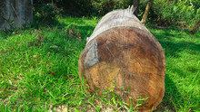 Tree Cutted Off