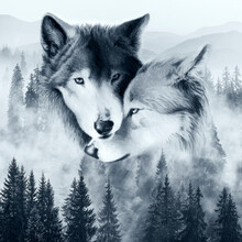 Wolf,drawing,painting,wolf Wal...