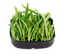 Fresh Chinese Morning Glory Vegetable On Dish Isolated On White Background