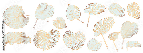Gold and luxury tropical leaves vector. Abstract exotic plan, tropical leaf palm,Monstera leaf vector design elements on the white background.
