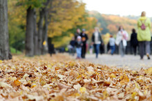 Autumn Season, View From Fallen Leaves To Crowd Of People Walking On A Street In City Park