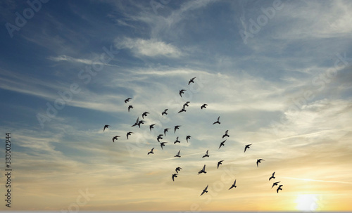 Fotografia birds flying over the sunset sky