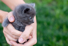 Gray Kitten One Month Old In H...