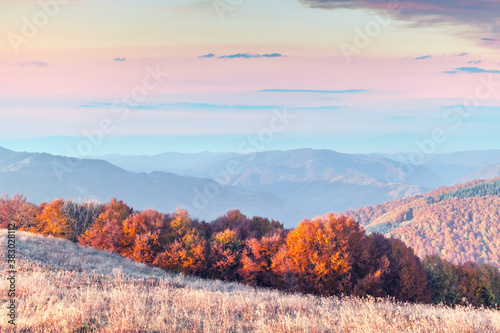 Picturesque autumn mountains with red beech forest in the Carpathian mountains, Ukraine. Landscape photography