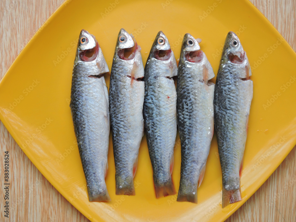 Fototapeta Labeo bata is a fish in genus Labeo. It is in the family Cyprinidae which is widespread in India, Nepal, Bangladesh, Pakistan and Myanmar. It is known as Bhangan in local language in India.