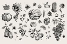 Happy Autumn. Harvest. Autumn Botanical Set. Vector Vintage Illustration. Black And White
