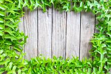 Frame Of Fern Leaves On A Wood...