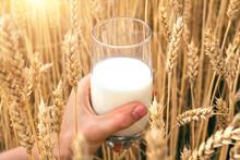 Milk In A Glass Beakerof, In M...