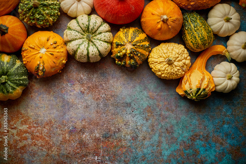 Obraz Different kinds colorful mini pumpkins placed on rusty background - fototapety do salonu