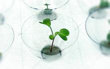 Plant A Sapling In A Used Bott...