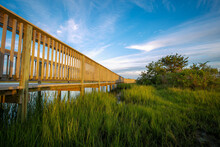 Wooden Boardwalk Over Marsh Grass Along The Shore With Bush And Tree