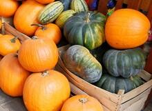 Multicolor Various Pumpkins As...
