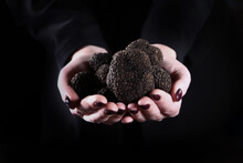 Black Truffles In The Hands Of...