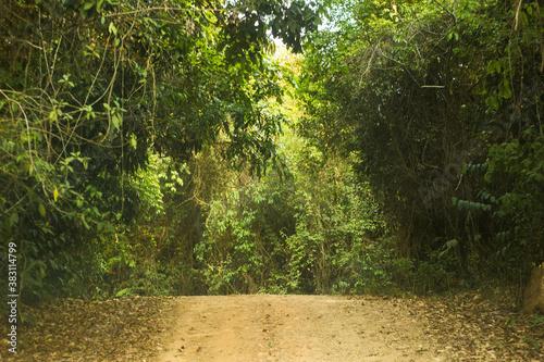 Fotografie, Obraz túnel verde na estrada de terra