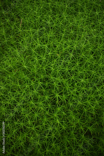 the texture of the forest moss