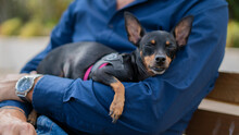 Small Dog Breed Pinscher Rela...
