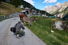 The Photographer Takes A Photo Of The Donkey Against The Background Of The Mountains
