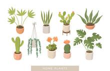 House Plants Vector Illustrati...