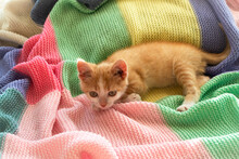 Red Kitten Sitting On Colorful...