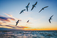 Birds Flying Over Ocean At Dusk In Australia