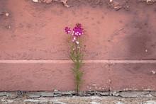 Small Purple Flower Growing Ou...