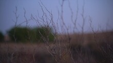 Thin Dry Branches Against A Blue Sky In A South African Winter Landscape At Dusk