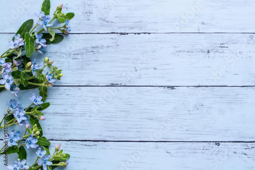 Obraz na plátně 青い花 ブルースターの木目背景フレーム