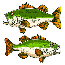 Illustrations Of Bass Fish In ...