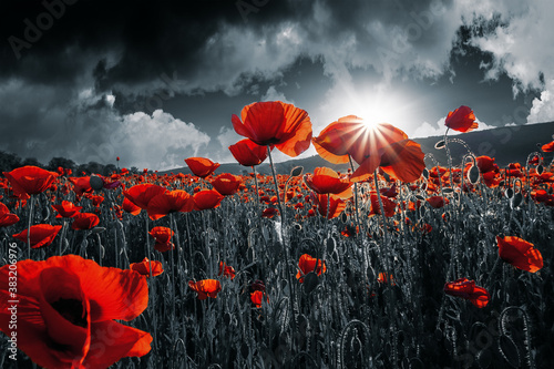 Plakaty czarne  red-poppies-in-the-field-background-imagery-for-remembrance-or-armistice-day-on-11-of-november