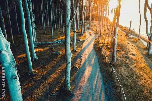 Fotomural Herbst im Gespensterwald