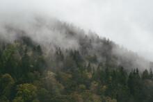 Nebel Hängt In Den Wäldern