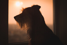 Silhouette Of The Dog Near Win...