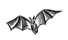 Flying Bat, Grunge Illustration, Vector.