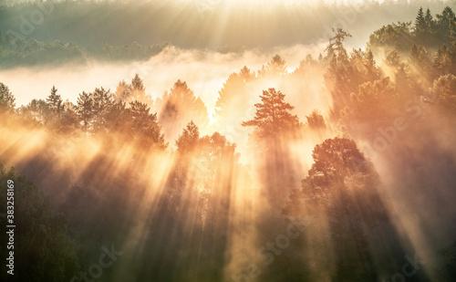 swit-w-mglistym-lesie-promienie-sloneczne
